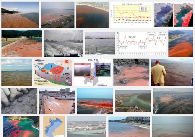 赤潮検索画像一覧