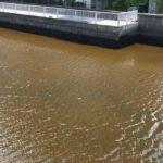 枝川の赤潮